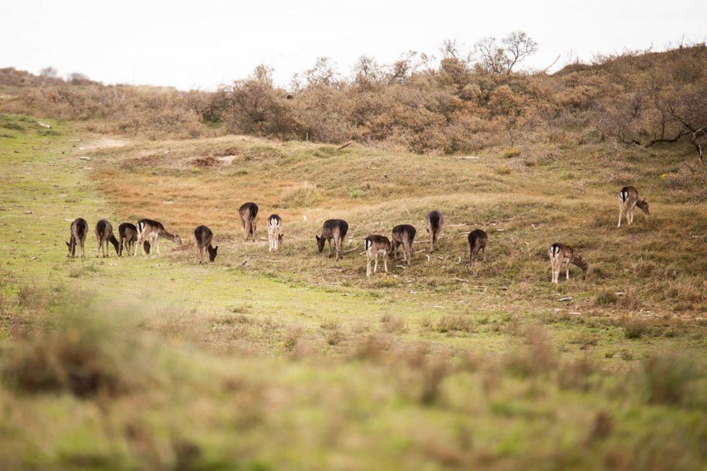 herten spotten in Zeeland met pubers
