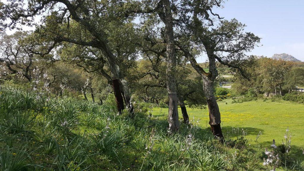 kurkbossen op Sardinie in de meivakantie