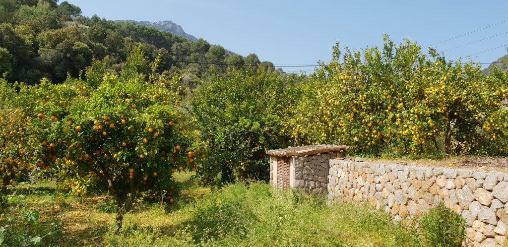 Mallorca, reisblog, vakantie met tieners, vakantie met pubers, citroenboomgaarden,hiken