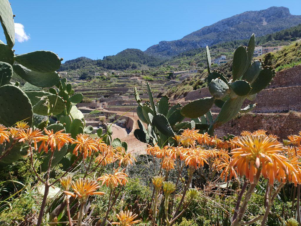 dorpje in het westen van Mallorca, Banyalbufar