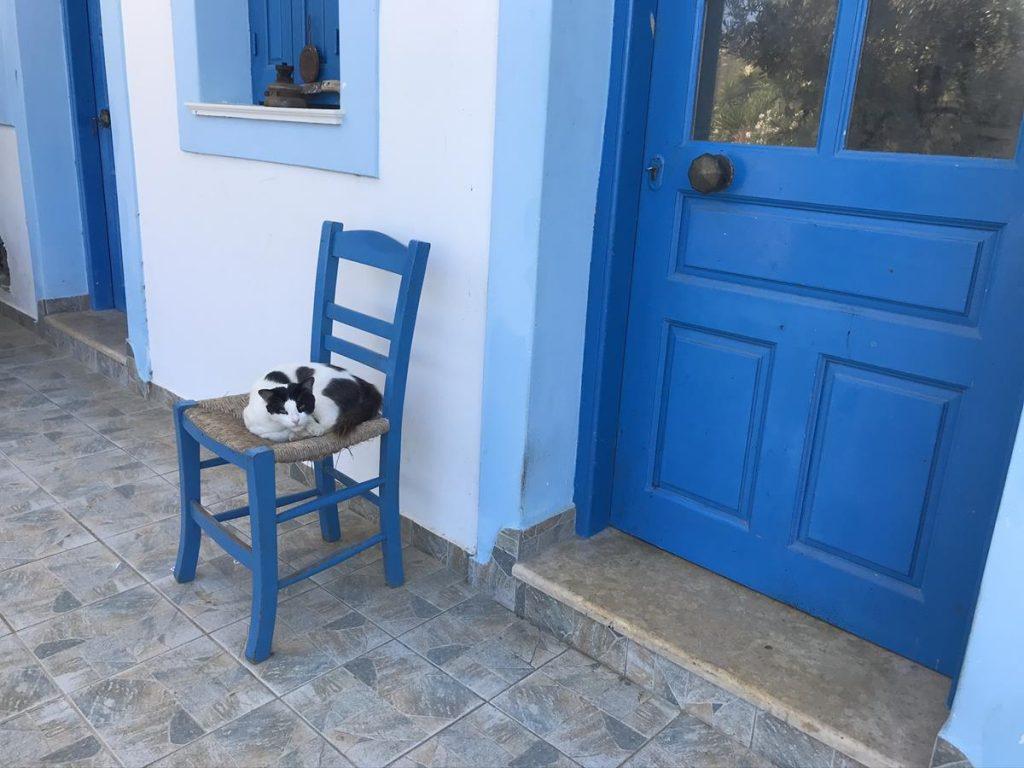 poes, kat, griekse katten, Olympos