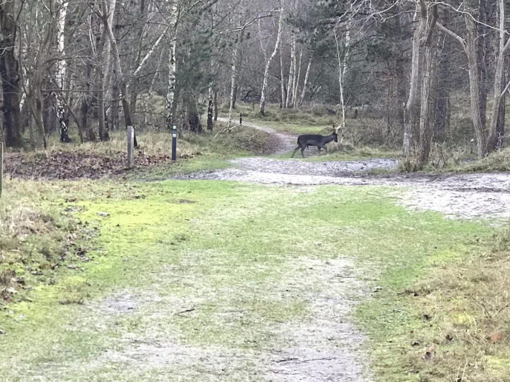 overstekend hert tijdens de wandeling met tieners